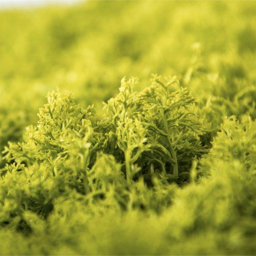 Jardines Verticales Artificiales - Variedad Liquen Artificial